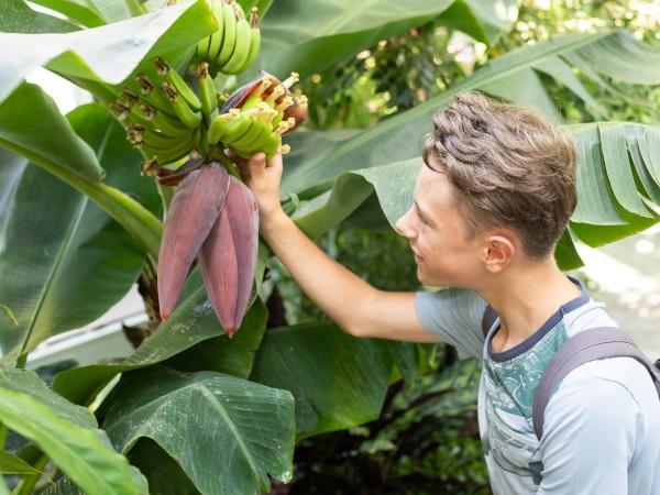 Tropische Nutzpflanzen.jpg