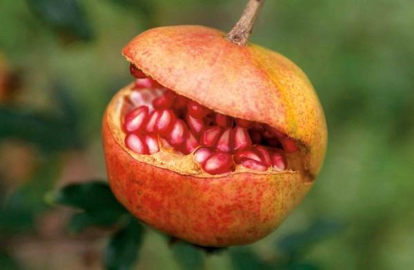 Faszinierende Früchte.jpg